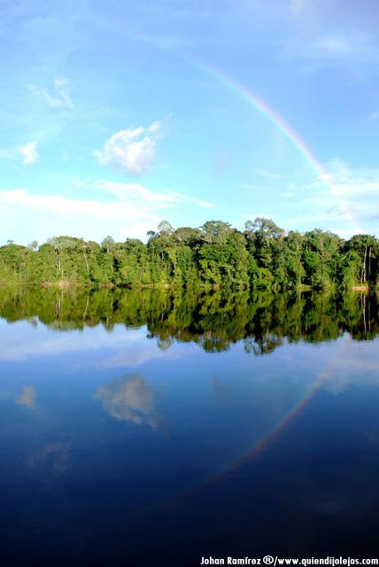Selva de colores